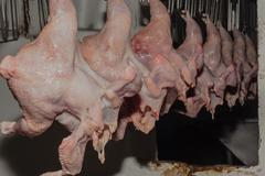 Abattoir Poultry Chickens Carcasses - stock photo