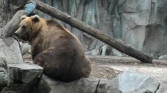 Bear in zoo Stock Footage