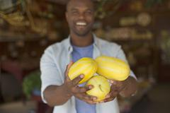 A farm growing organic vegetables and fruit. A man harvesting striped squashes. Stock Photos