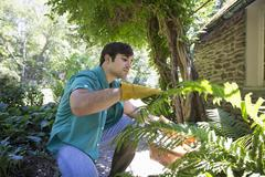 A farm growing and selling organic vegetables and fruit. A young man working. Stock Photos