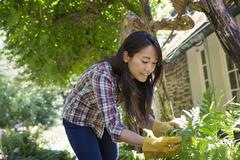A farm growing and selling organic vegetables and fruit. A young woman working. Stock Photos