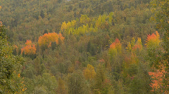 Autumn trees 1 Stock Footage