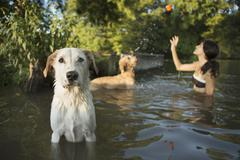 A woman swimming with her two dogs in a lake. Throwing the ball in play. - stock photo