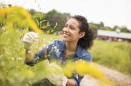Stock Photo of Woman working on an organic farm. Admiring tall flowering plants.