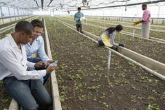 A commercial greenhouse in a plant nursery. Two men using a digital tablet. Stock Photos