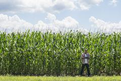 A man in working clothes standing in front of a maize crop, towering over him. - stock photo