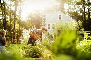 Stock Photo of A woman picking vegetables in a garden. A child walking through tall plants.