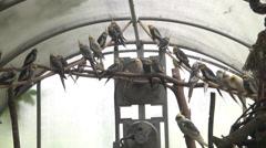 Bird sanctuary WS MS Stock Footage