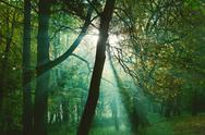 Stock Photo of mystical sun rays between trees