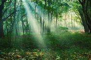 Stock Photo of sun rays between trees in forest