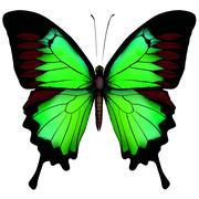 Vihreä perhonen Piirros