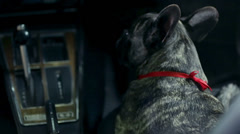 Woman fondles french bulldog during the night drive Stock Footage