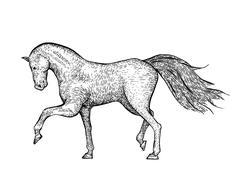 Engraved vintage horse - stock illustration