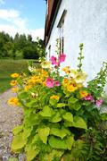 Garden flowers in front of small aged home Stock Photos