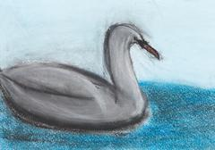 children drawing - grey swan - stock photo