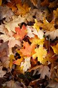 Late fall leaves background Stock Photos