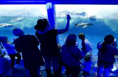 kelly tarltons sea world - stock photo