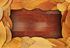 Abstract frame made from cherry  leaves Stock Photos