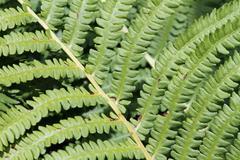 close up of green bracken - stock photo
