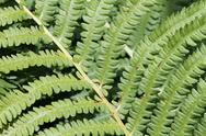 Stock Photo of close up of green bracken