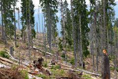 Image after deforestation Stock Photos