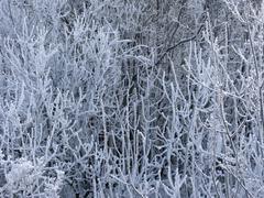 Trees with hoarfrost Stock Photos
