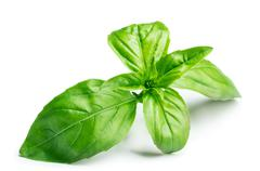 Basil isolated on white Stock Photos