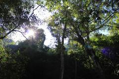 Sun shines trough jungle Stock Photos