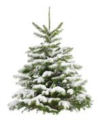 Perfect little christmas tree in snow Stock Photos