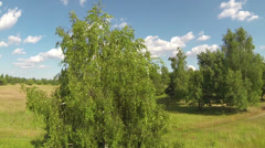 Flying Around a Tree Stock Footage