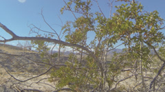 Anza-Borrego Desert State Park - stock footage