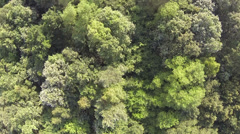 Over Trees Flying Stock Footage