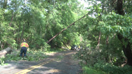 Stock Video Footage of worker and trees road partially cleared