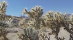 Anza-Borrego Desert State Park Stock Footage
