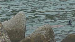 Man snorkeling ocean sea activity balance enjoy recreational lifestyle lie coast Stock Footage