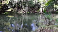 Hillsborough River pan left Stock Footage
