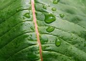 Stock Photo of wet leaf