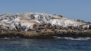 Stock Video Footage of montague island seals