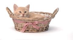 British kitten in basket Stock Footage