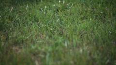 Nainen kimpun auringonkukkia istuu ruoho Arkistovideo