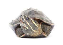 Stock Photo of turtale