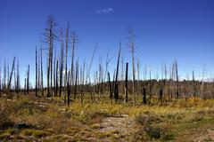 Aftermath of forest fire Stock Photos