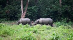 Gray rhinoceros Stock Footage