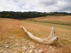 dead trunk in a field - stock photo