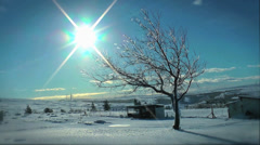 Tree After Ice Storm Stock Footage