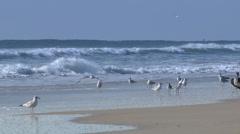 4K Seagulls on the Beach 3830 Stock Footage