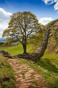 Sycamore gap on hadrian's wall Stock Photos