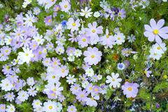 Wild flowers blooming Stock Photos