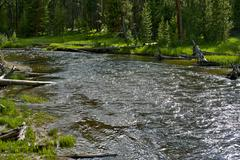 forest river in wyoming wilderness - stock photo