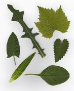 Different tipe of leafs Stock Photos